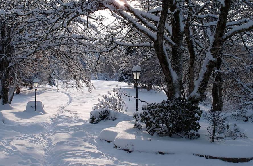 Rosenhofgarten im Winter